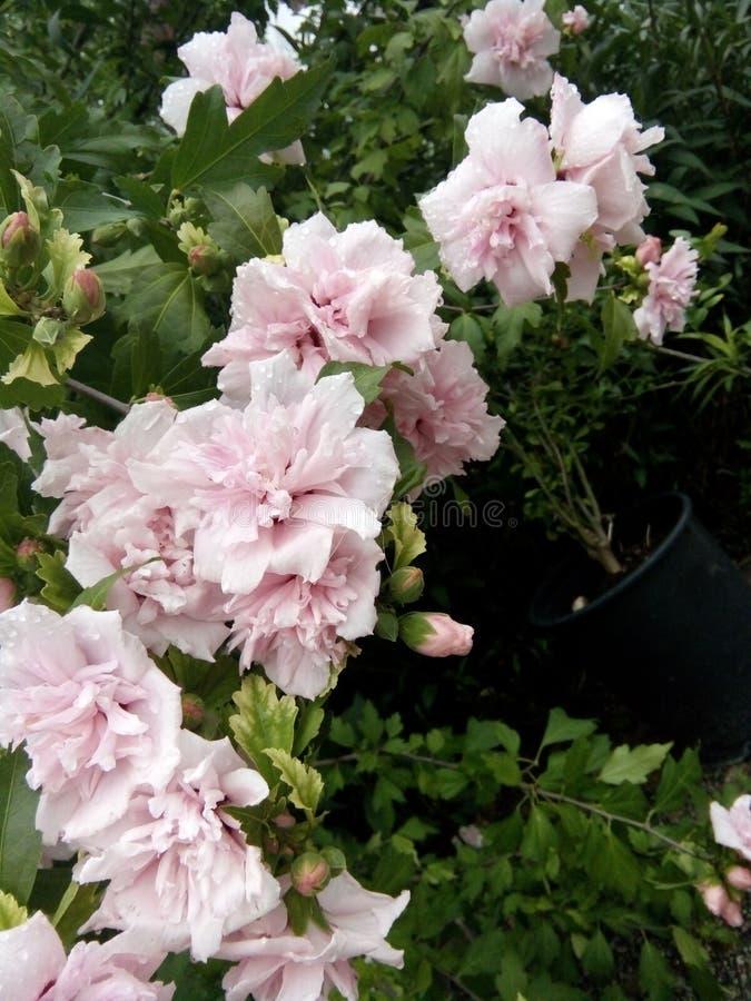 Kwiat po rining fotografia royalty free