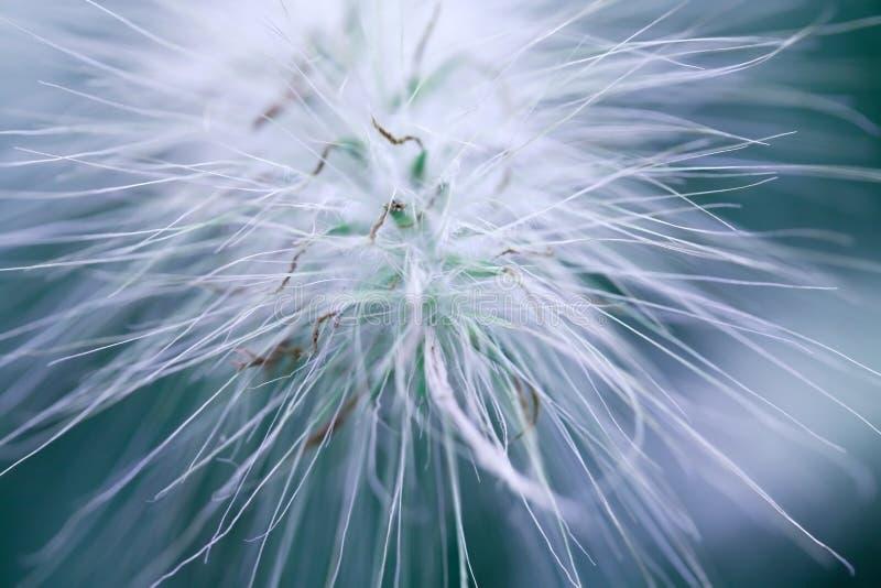 kwiat poboru fotografia stock