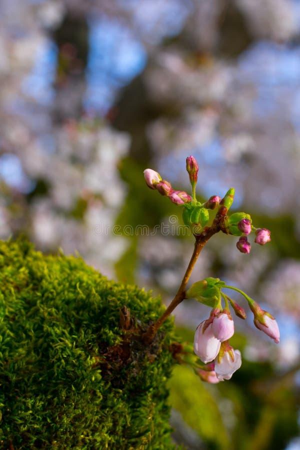 Kwiat przed kwiatem zdjęcia stock