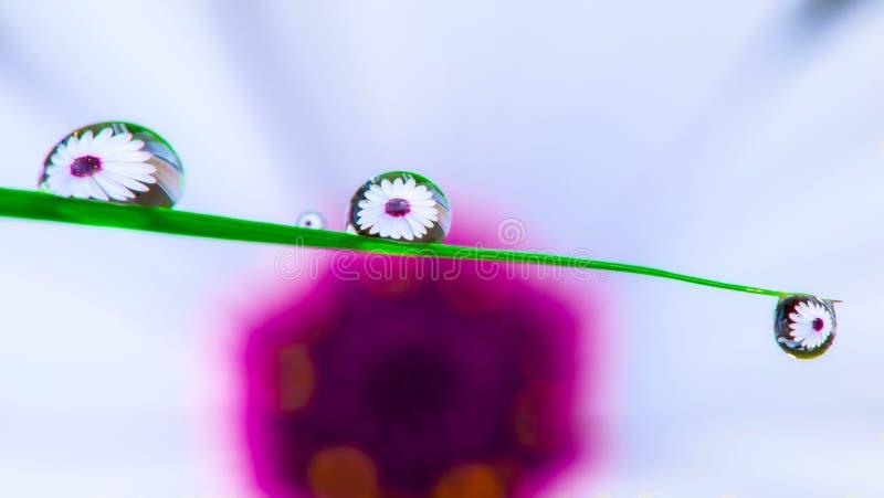 Kwiat przez wodnych kropelek fotografia royalty free