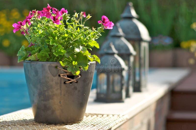 Kwiat przy basenem obrazy royalty free