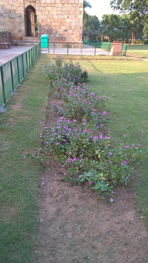 Kwiat przy Delhi obraz royalty free
