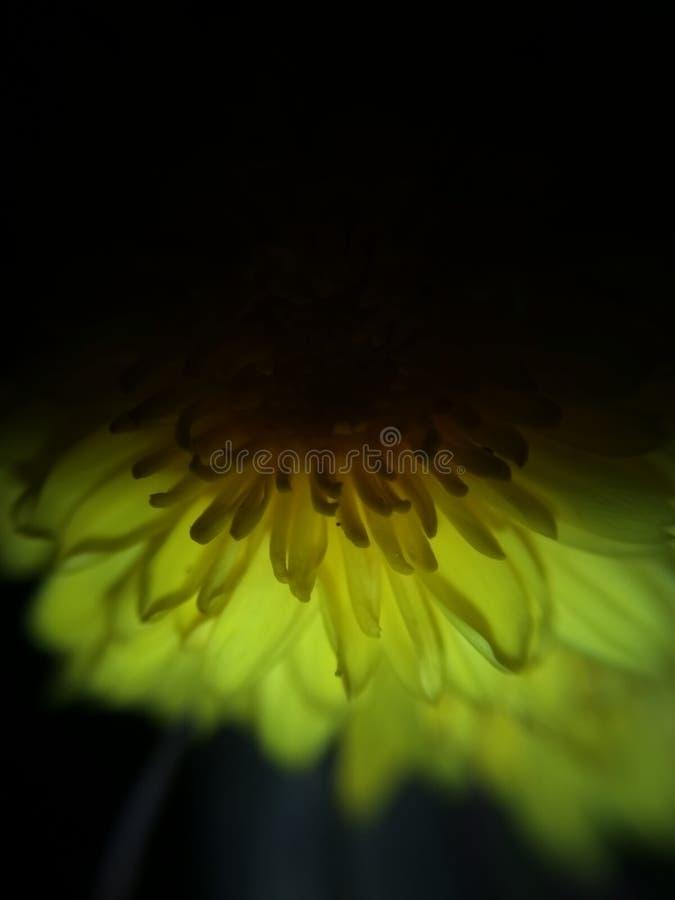 Kwiat przy nocy światłem obrazy royalty free