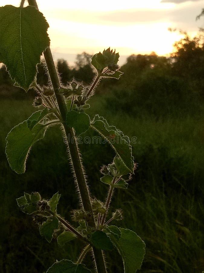 Kwiat przy półmrokiem zdjęcie royalty free