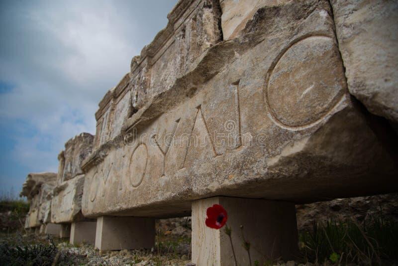 Kwiat przy ruinami Hierapolis fotografia stock