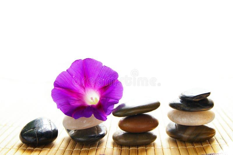 kwiat purpury obraz royalty free