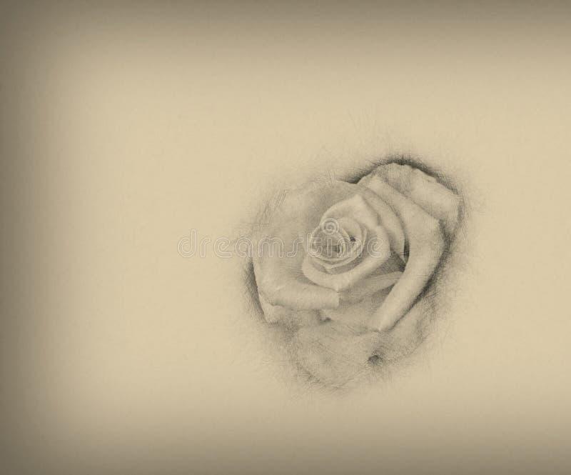 Kwiat róży rocznika stylu sztuki projekta ręka rysujący ilustracyjny tło obraz stock