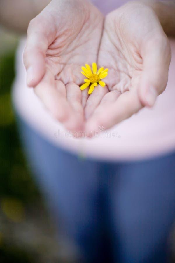 kwiat ręce zdjęcia stock