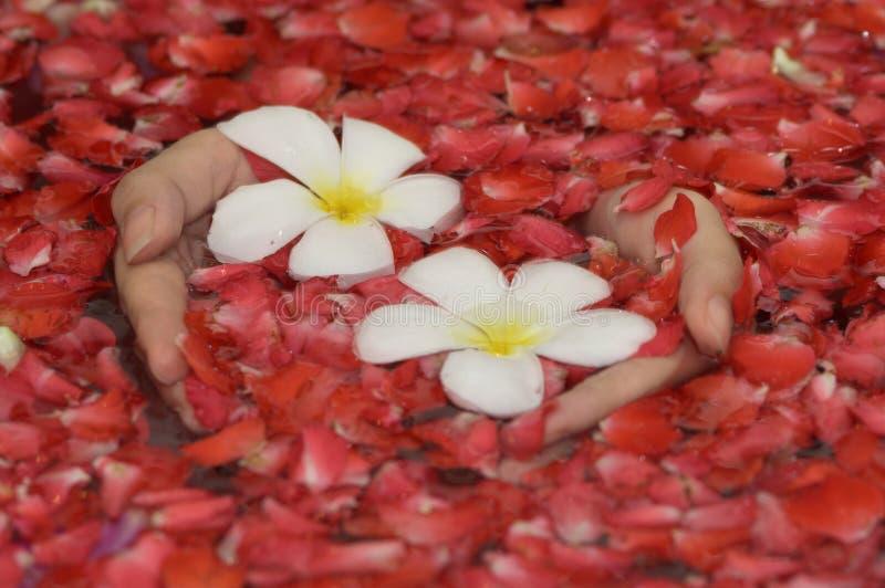 kwiat ręce fotografia stock