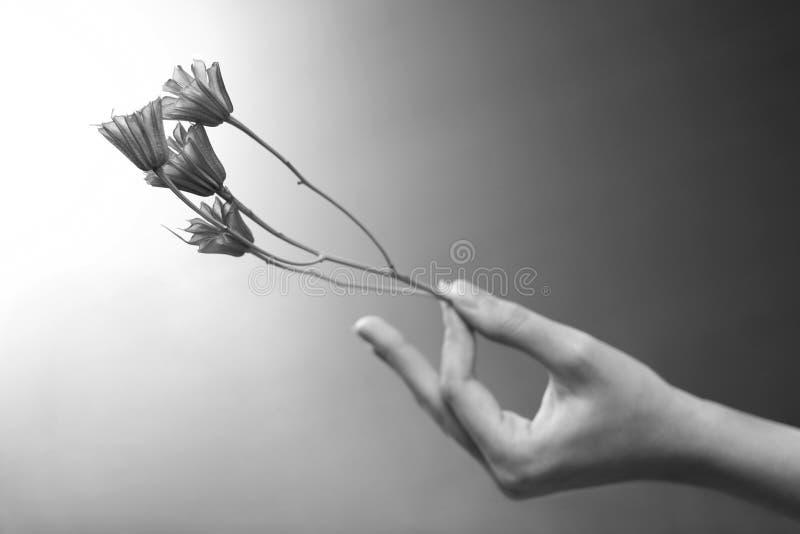 kwiat ręka zdjęcia royalty free