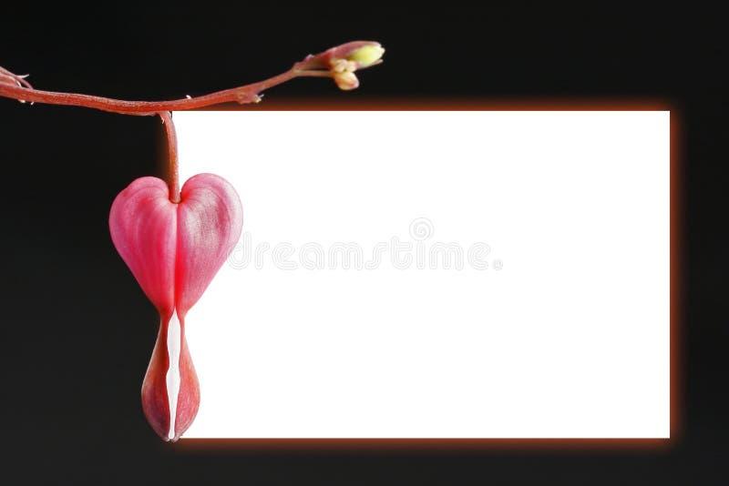 kwiat ramy krwawiące serce obrazy stock