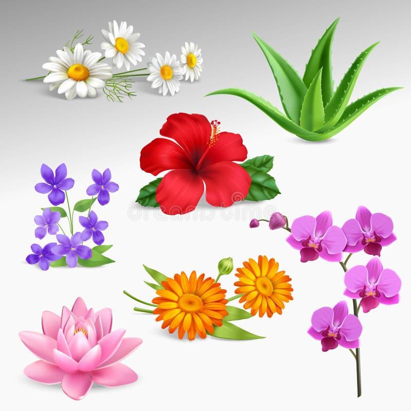Kwiat rośliien Realistyczne ikony Inkasowe royalty ilustracja