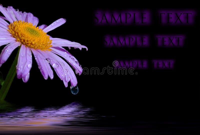 kwiat rumianku odbicia zdjęcia stock