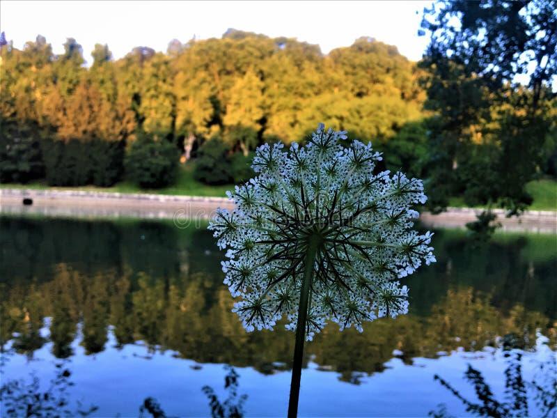 Kwiat, rzeka, odbicie i natura, obraz royalty free