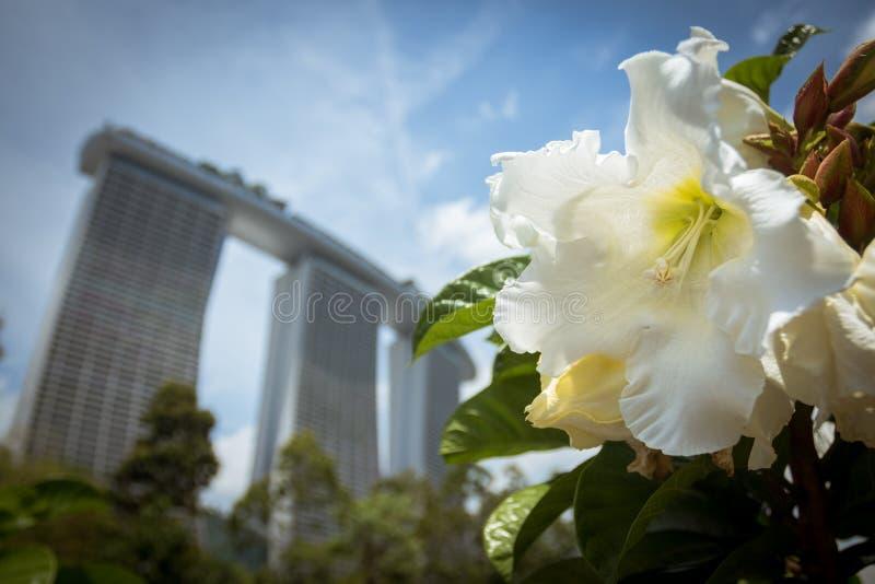 Kwiat - słoneczny dzień - Marina podpalani piaski fotografia stock
