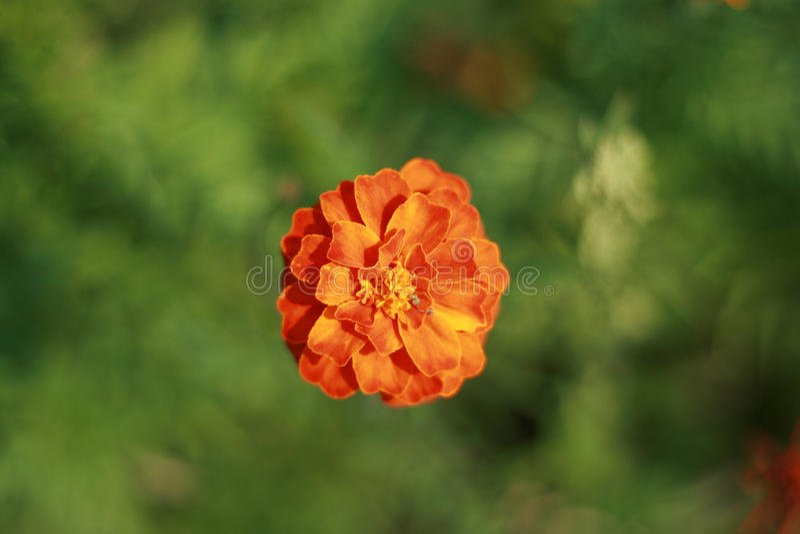kwiat samotny zdjęcie stock