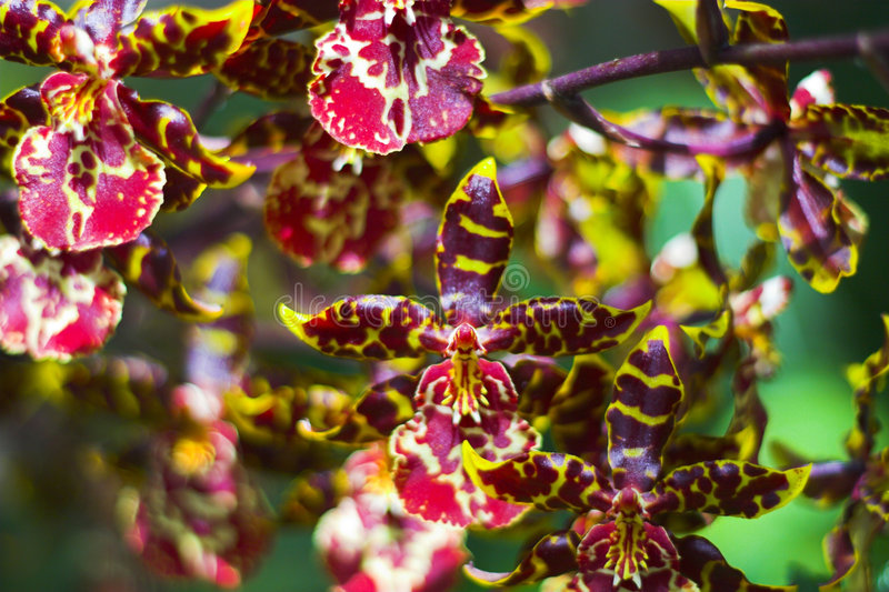kwiat show fotografia stock