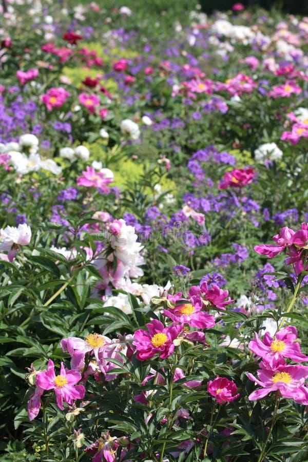 kwiat spać obrazy royalty free