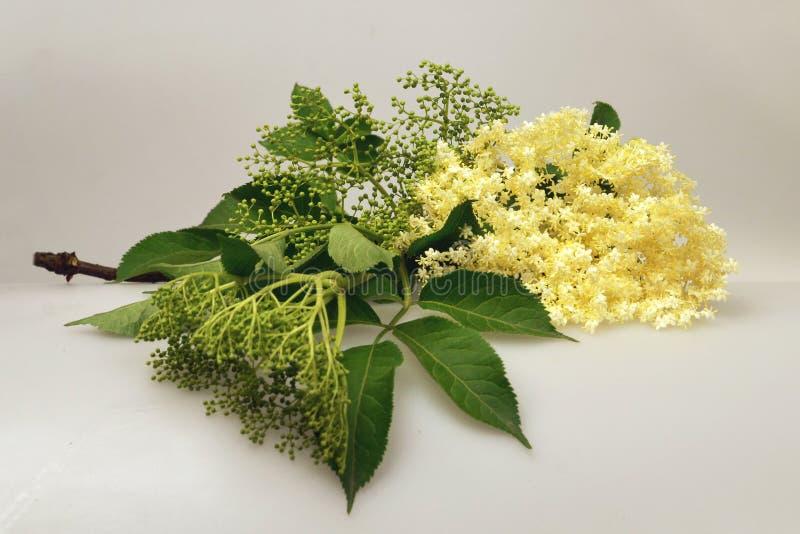 kwiat starego Zamyka up stary kwiat zdjęcia royalty free