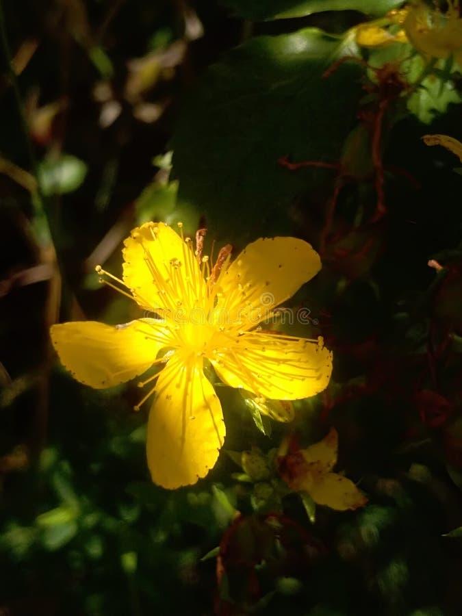 Kwiat strzelający w ciemności w popołudniu obrazy royalty free