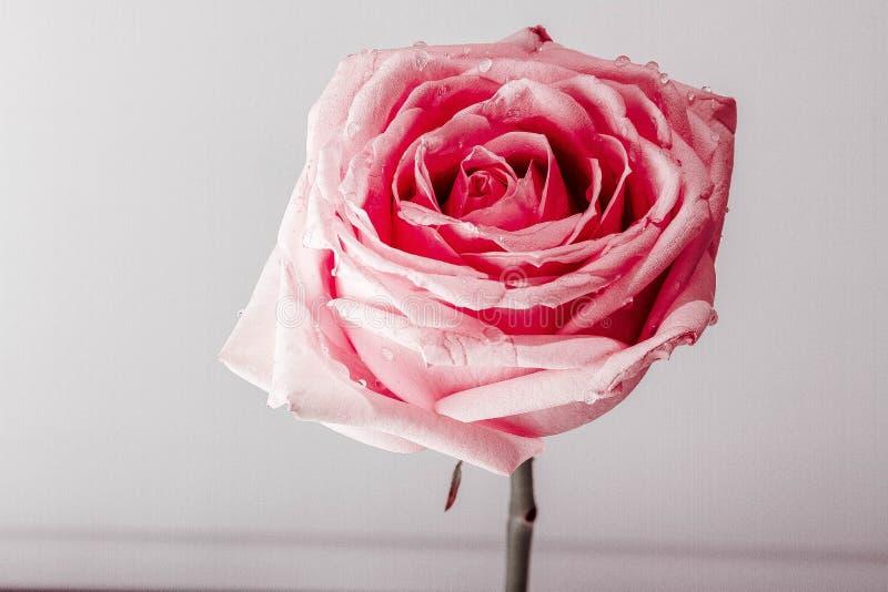 Kwiat sztuka obraz royalty free