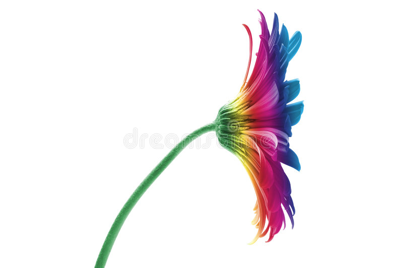 kwiat tęcza fotografia stock