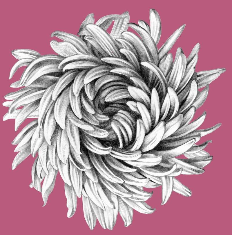 Kwiat tła rysunku ołówka drzewny biel royalty ilustracja