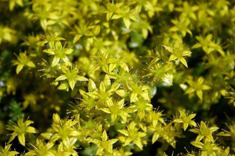 kwiat tło obraz stock
