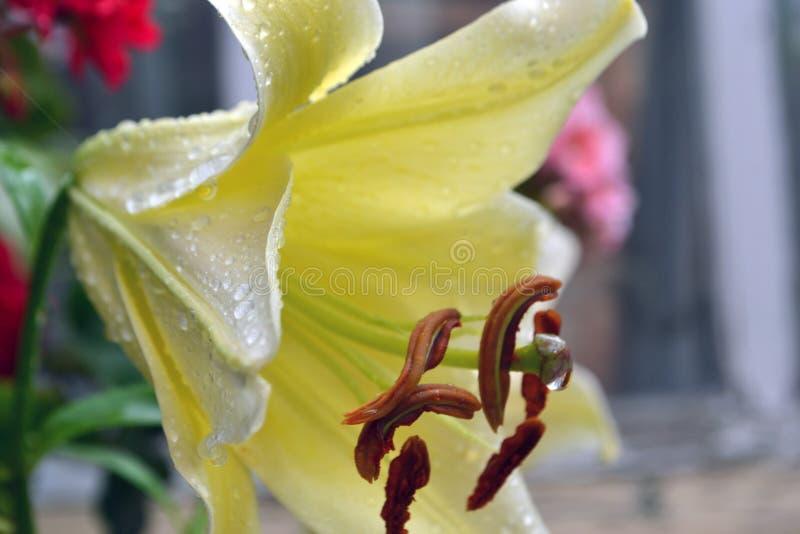 Kwiat ? fotografia stock