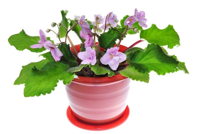 kwiat violet trawy obraz stock