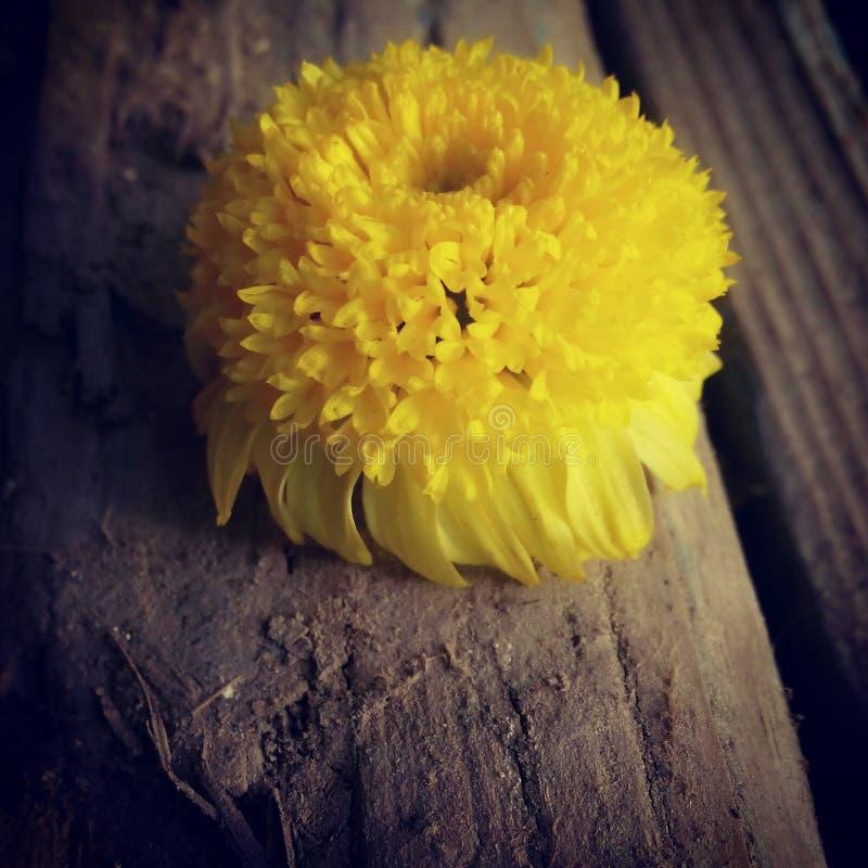 Kwiat władza obraz royalty free