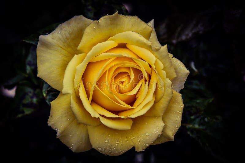 Kwiat władza zdjęcia stock