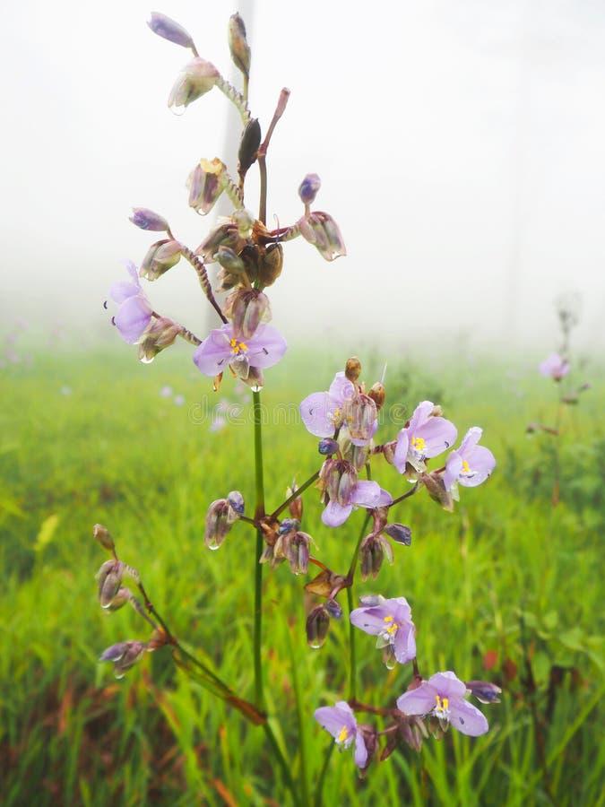 Kwiat w drewnach zdjęcie stock