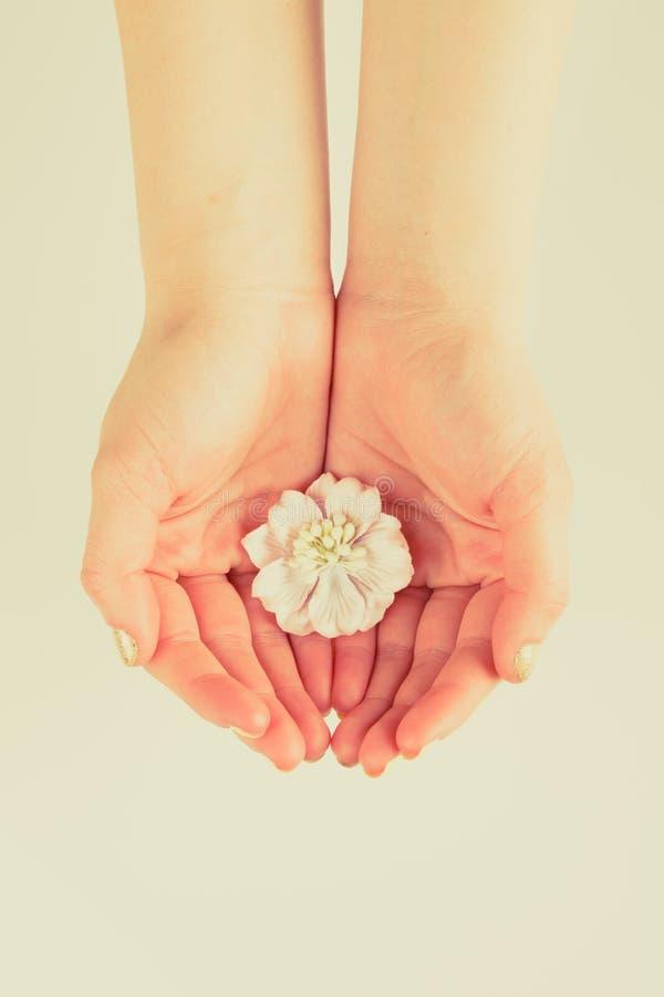 Kwiat w kobiet rękach zdjęcie royalty free