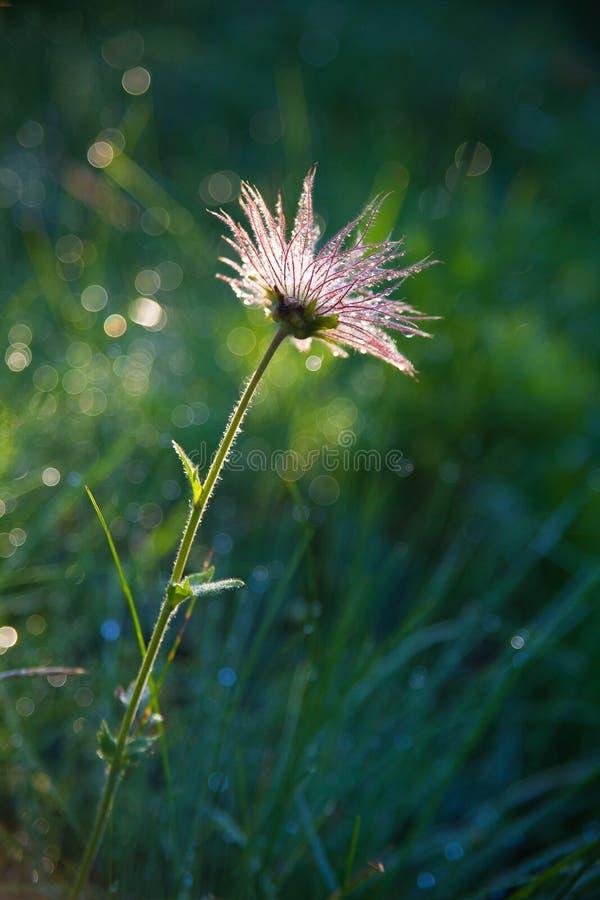 Kwiat w lata fild fotografia stock