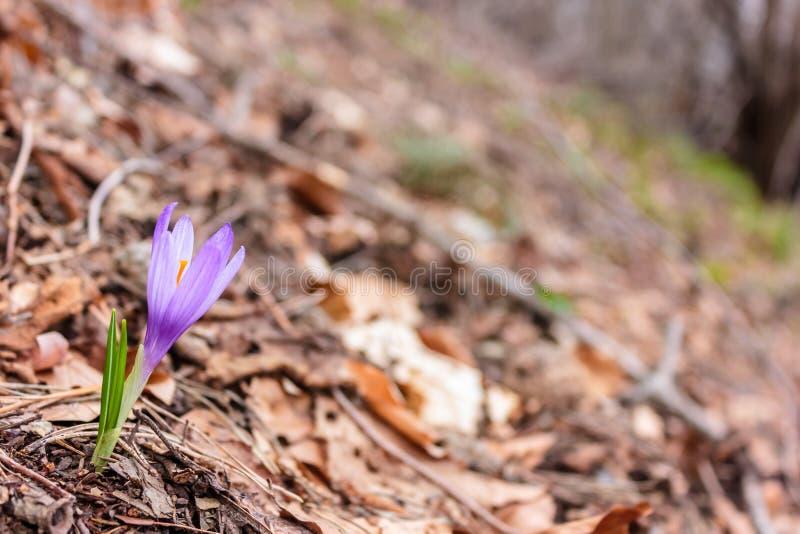 Kwiat w lesie zdjęcie stock