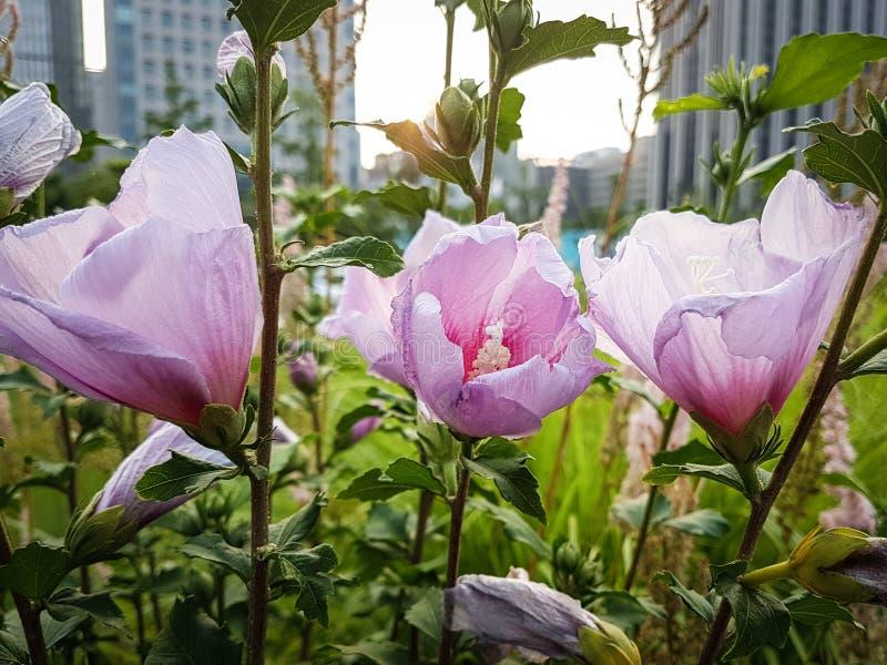 Kwiat W mieście obrazy royalty free