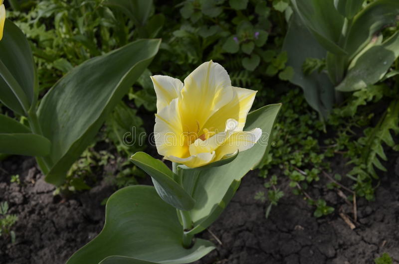 Kwiat w naturze obraz stock