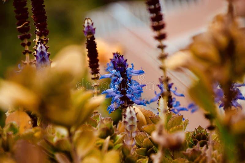 Kwiat w ogródach fotografia stock