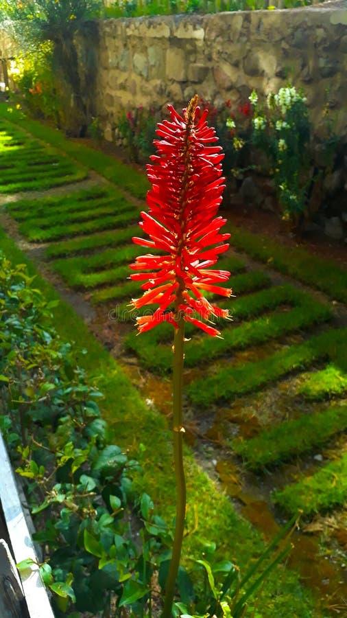 Kwiat w ogródzie troszkę zdjęcie royalty free