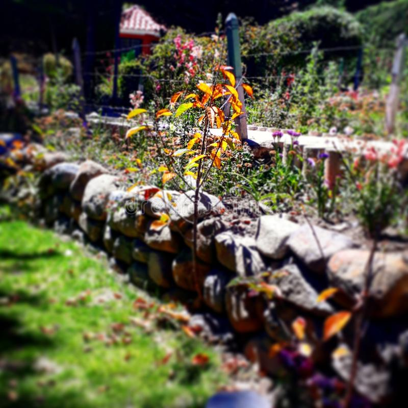 Kwiat w ogródzie troszkę fotografia royalty free