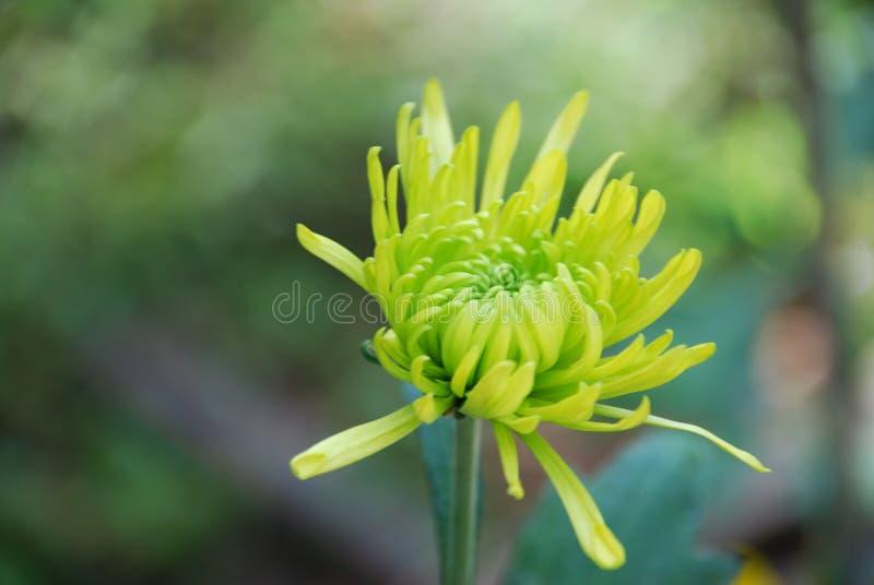 Kwiat w polu obrazy royalty free