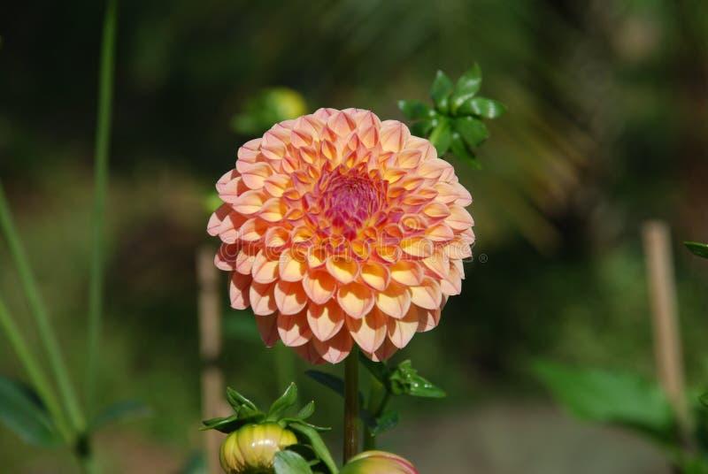 Kwiat w polu zdjęcie stock