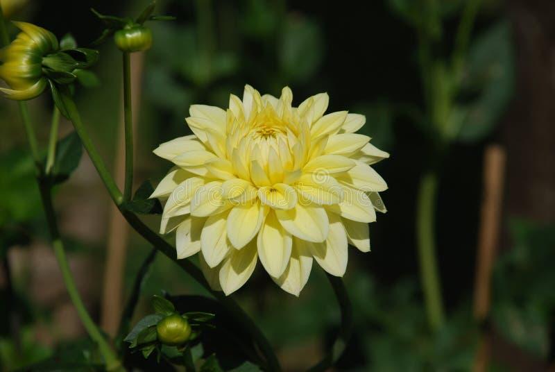 Kwiat w polu obrazy stock