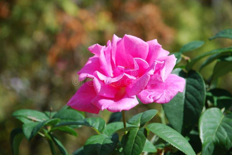 Kwiat w polu fotografia royalty free