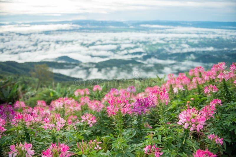 Kwiat w różnorodnym kolor wiosny tle fotografia stock