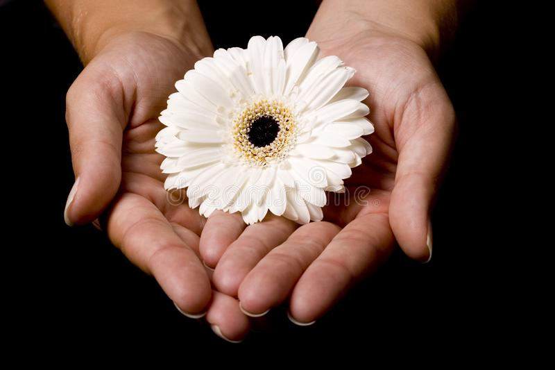 Kwiat w rękach fotografia stock