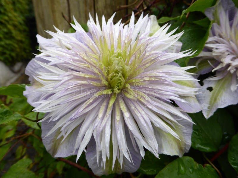 Kwiat w spadku kwiacie i patrzeć wielki zdjęcie stock