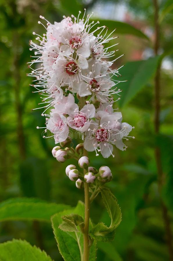 Kwiat w Wrześniu fotografia stock