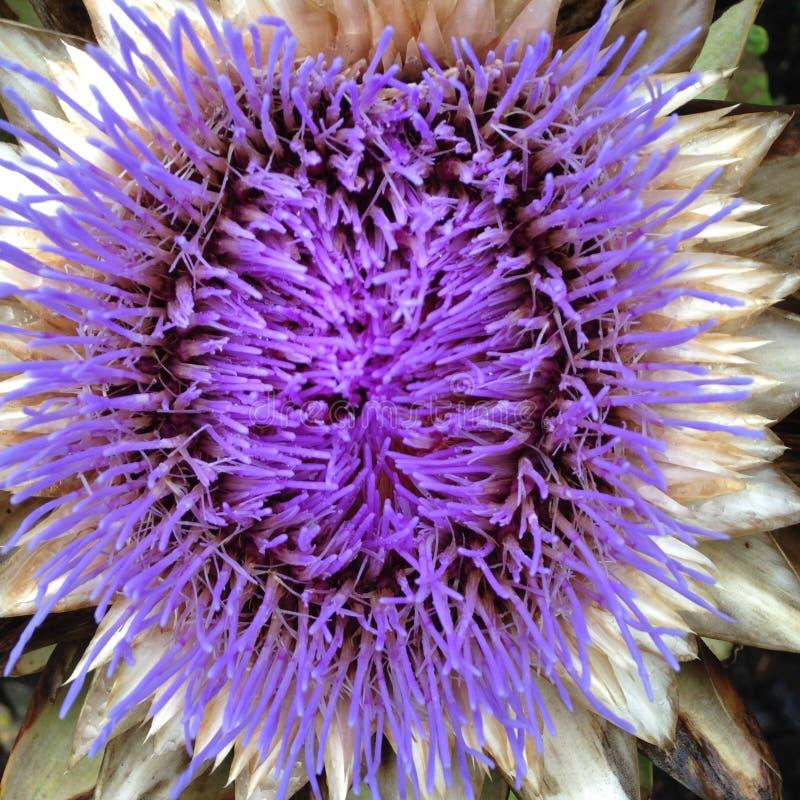 Kwiat wewnątrz fotografia stock